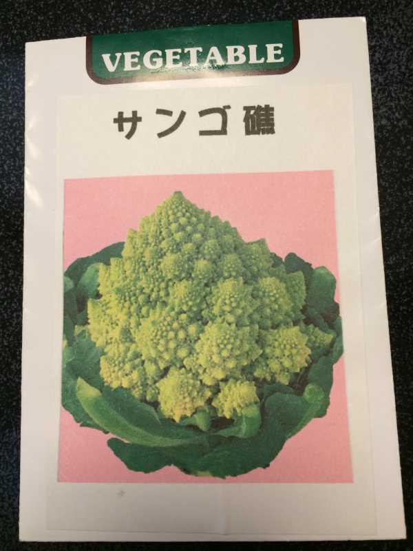 【珍しい野菜栽培】2.育てるレア野菜の種は通販で。藤田種子で発注しました! (3)