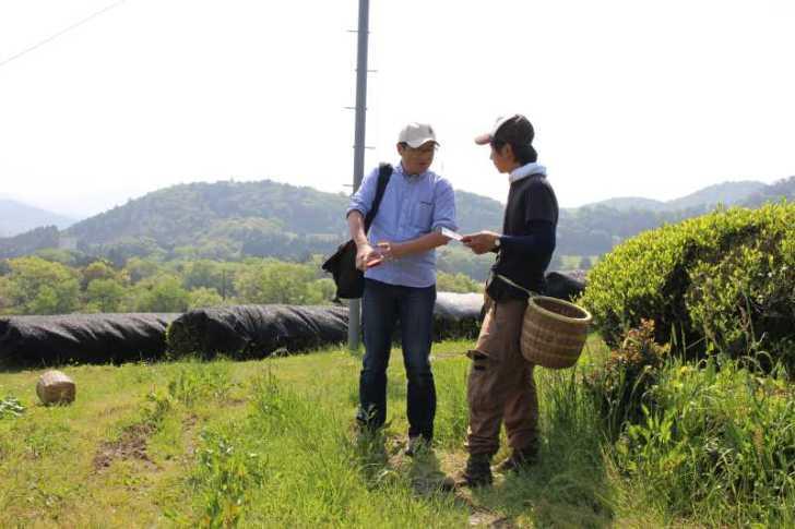 有機栽培されたお茶を手摘みしてきたよ!【愛知県新城市鈴木製茶】 (10)