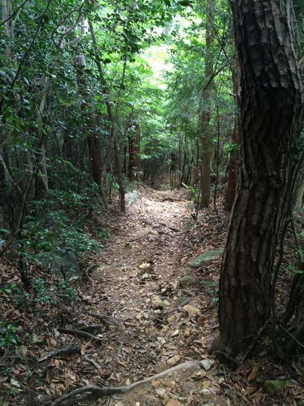 三ツ瀬明神山を登山してきたよ!登山ルートは絶景の乳岩コース【愛知】 (7)