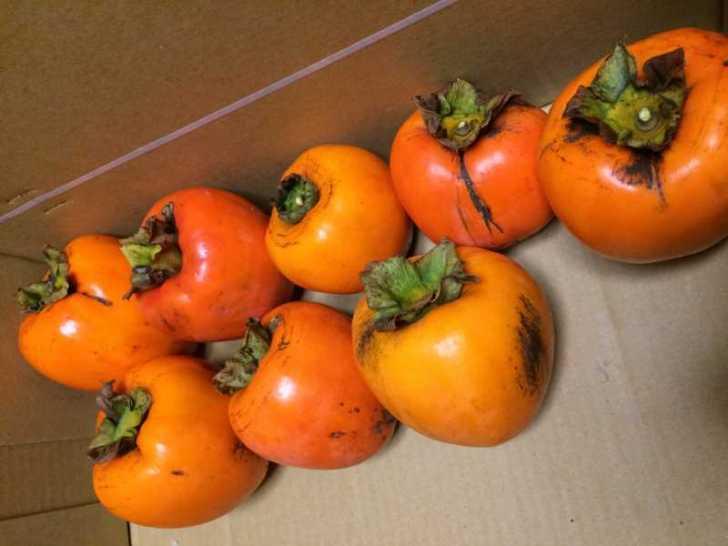 渋柿を醸造アルコールで渋抜き。渋味抜いた柿が甘すぎてやばい! (1)