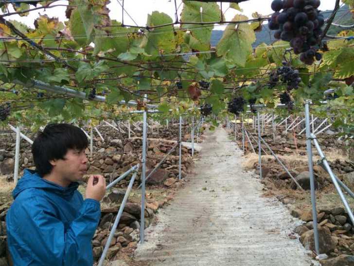 ワインの王様のぶどう品種「ピノ・ノワール」を使う山梨のワイナリーを見学してきたよ! (3)