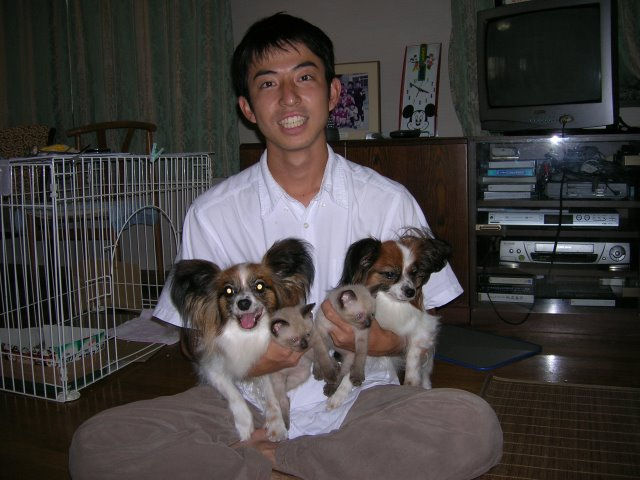 我が家のかわいい犬(パピヨン)と猫(雑種)がラインスタンプになったよ! (3)