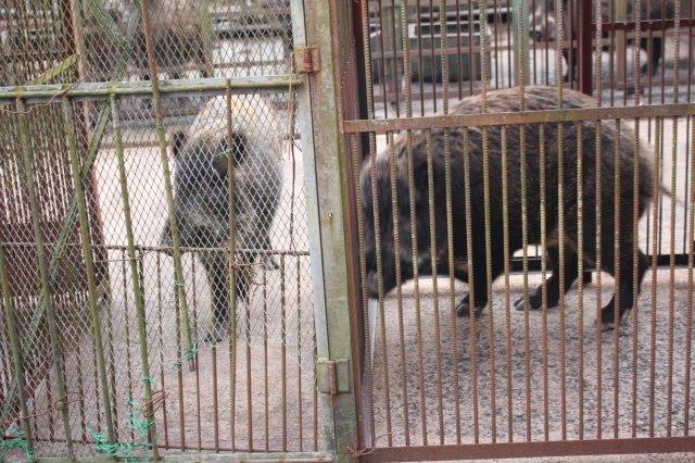 イノシシを飼育している山田さんと、解体した猪のモツ祭りでヒャッハー!【愛知県新城市】 (3)