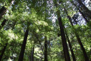 高尾山のきれいな森