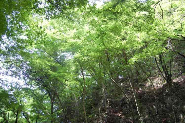 輝く緑の木々