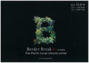 ボーダーブレイク 珍奇植物パイルブルックリン チランドシア チランジア シダ
