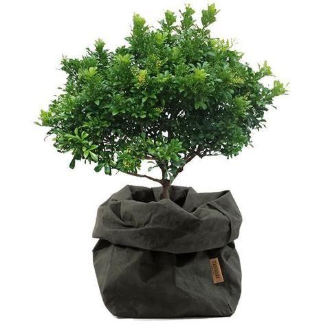 Uashmama Paper Bag Corto