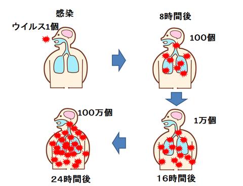 インフルエンザウイルスの増殖