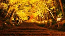 胡宮神社紅葉