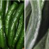 【記事】キュウリ農家とディープラーニングをつなぐ TensorFlow