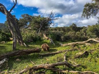 Take a step - Australien - Eden - Sydney - Melbourne