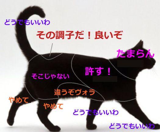 ネコノキモチマップ