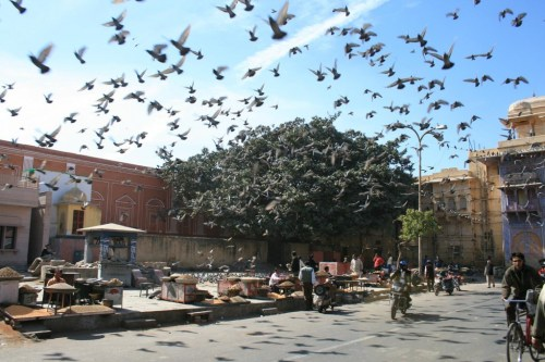 Be careful to Pigeon's army !!!