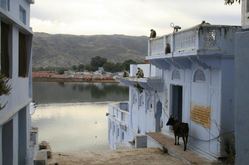 Ghat with monkey's & cow's