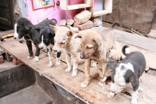 Puppy's family in the street