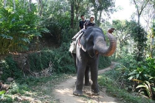 Elephant ride in Kumily
