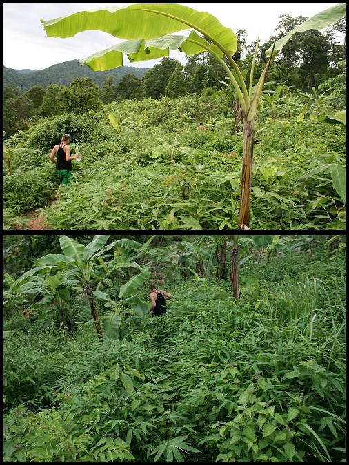 Wild jungle trekking