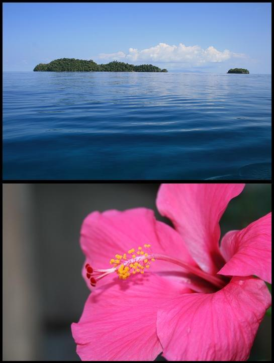Kadidiri & Flower
