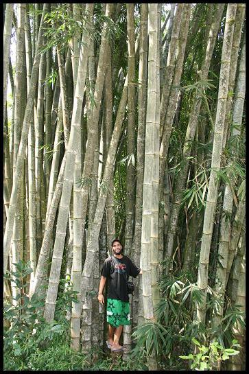 Bamboo Vins