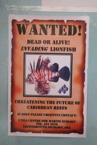 7 Wanted Lion Fish