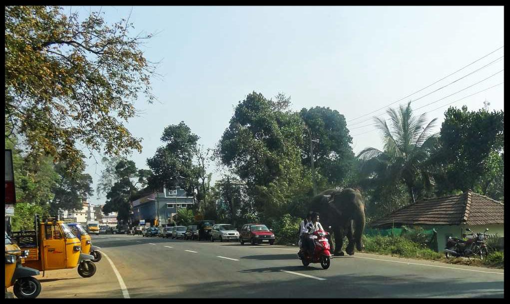elephant sur route en inde