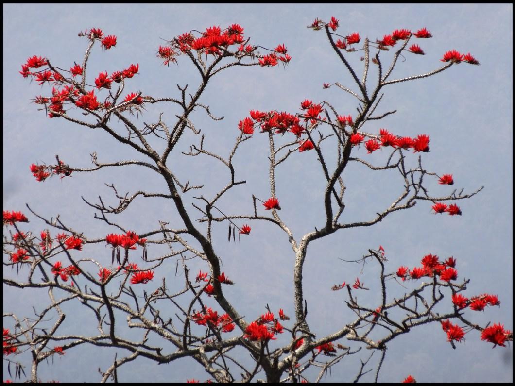 wayanad tree