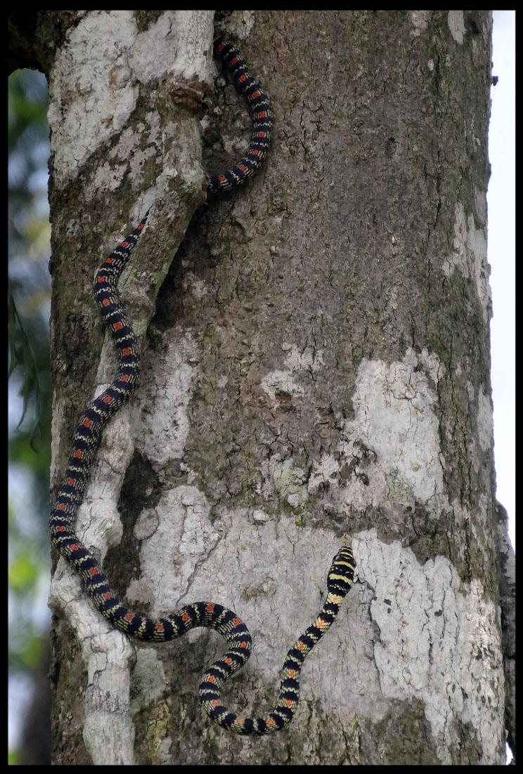 wayanad snake