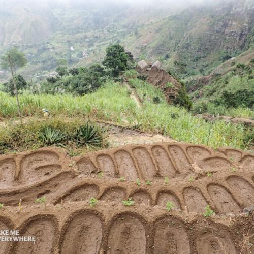 Plantation Santo Antao