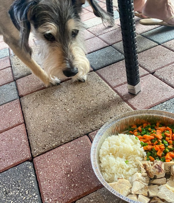 Max's Grille Doggie Diner Menu