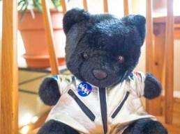 Nasa Bear