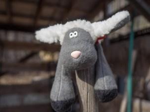 Stufffed Sheep