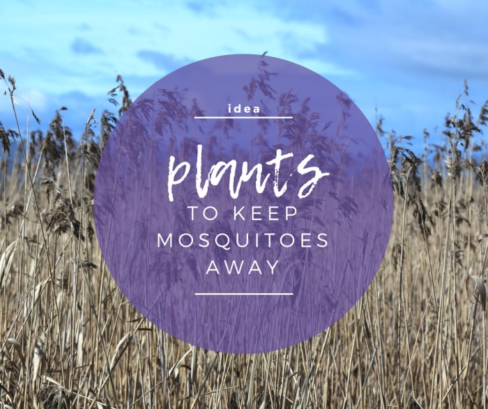 IDEA: Plants to Keep Mosquitoes Away