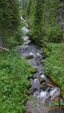 Trailside Stream
