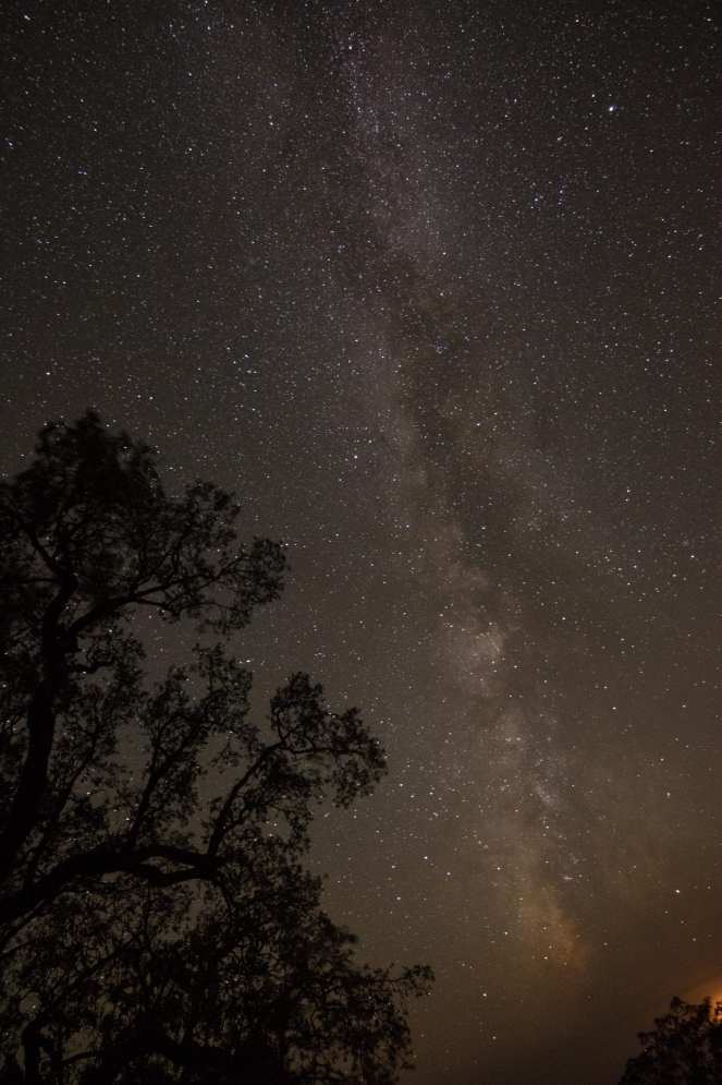Milky Way milky way live oak stars starry night sky