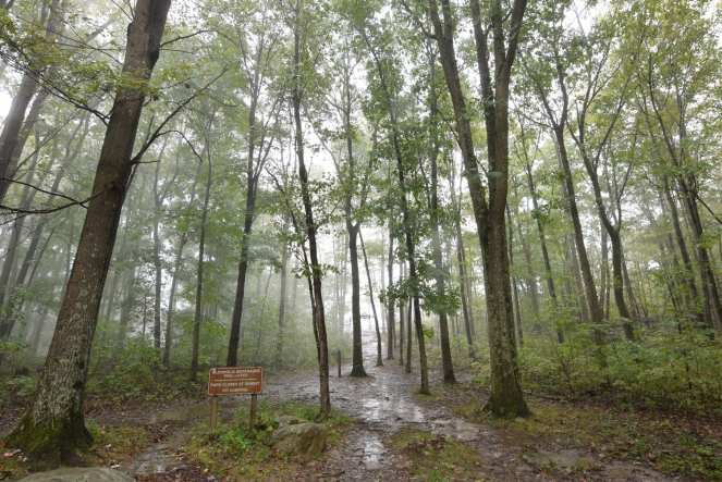 A view through the trees into the fog on Baughman Trail to the Baughman Rock Overlook