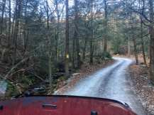 A forest service access road curves through the dense evergreen forest in Pennsylvania gamelands