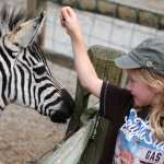 Girl pets a zebra at Living Treasures