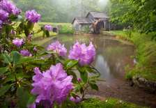 Rain-soaked rhododendron blooms perfectly frame Mabry Mill in Roanoke's Blue Ridge mountains
