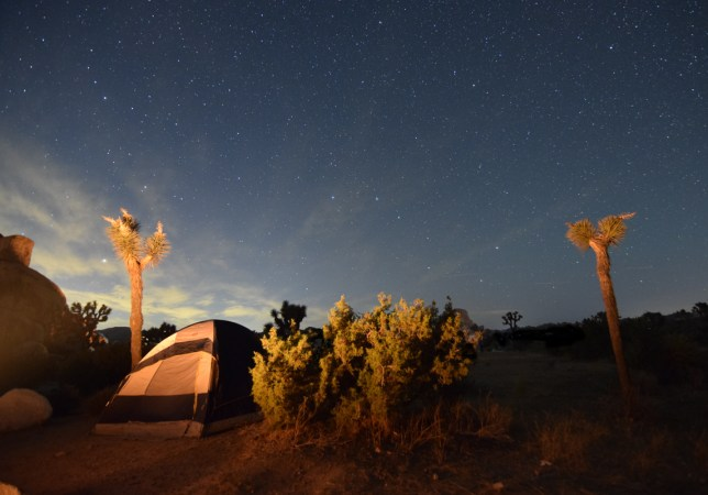 A tent sits tucked in between tall joshua trees and a small evergreen shrub, underneath a vast expanse of stars overhead. The entire scene is lit up by the warm glow of a nearby campfire.