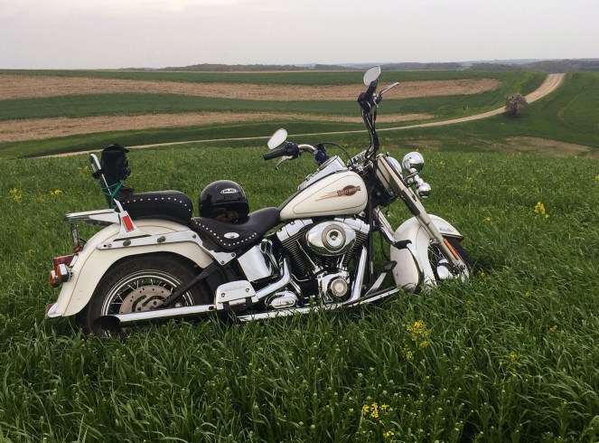 A white Harley Davidson softail classic sits in tall grass with a long dirt road in the background
