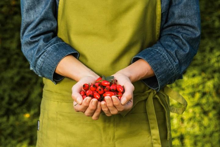 7 gute Gründe für das Männlein, das da steht im Wald allein: die purpurrote Hagebutte