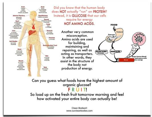 Role of carbohydrates in human body