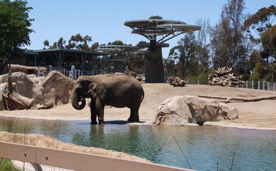 San Diego Zoo(サンディエゴ動物園)