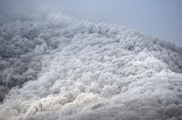 木曽駒ヶ岳 菅の台バスセンター 霧氷