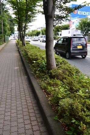 柿田川公園 国道1号線