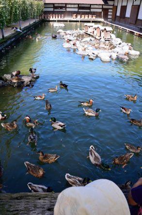 掛川花鳥園 オシドリの池