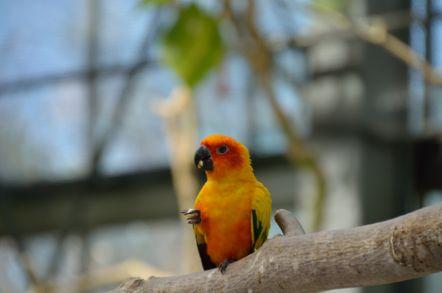 掛川花鳥園 スイレンプール コガネメキシコインコ