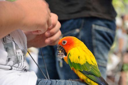 掛川花鳥園 ナナイロメキシコインコ