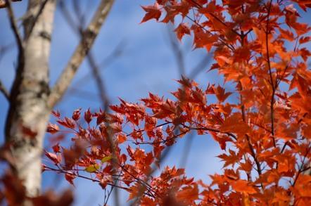 志賀高原 池めぐり 紅葉