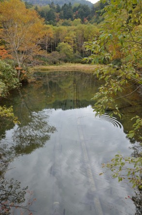 志賀高原 池めぐり 清水公園 上流